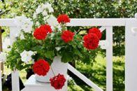Kukkakauppa Tarhurin Kukka ja Sidonta