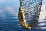 Kalastaja Vento Aalto