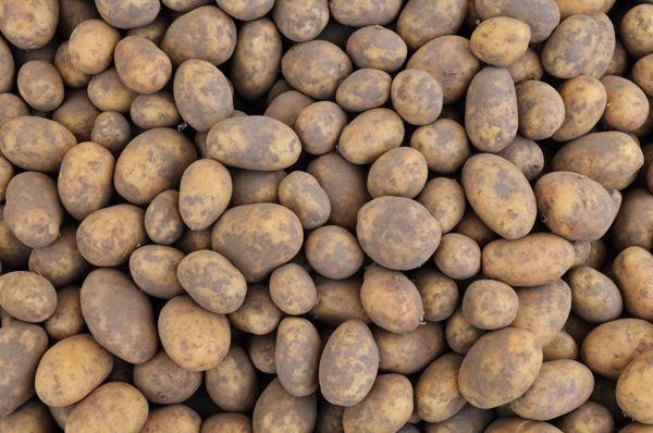 Hultholm perunat-potatis, Mustasaari
