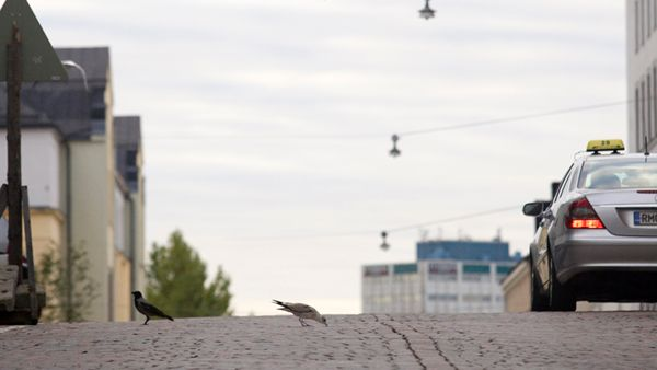 Ajovarma Oy, Helsinki