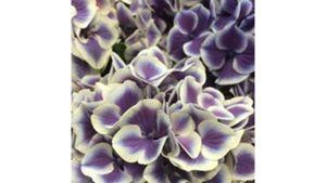 Kukkakauppa Soukan Sydän , Espoo