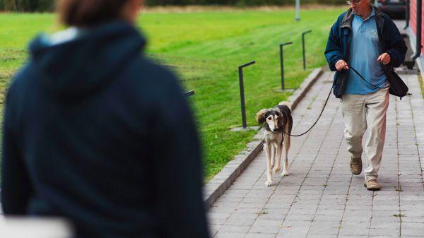 Koira-Kissaklinikka Oy, Turku