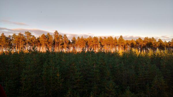 Metsäkoneurakointi Perttunen Oy, Oulu