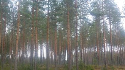 Länsi-Suomen Metsätilat Oy, Sastamala