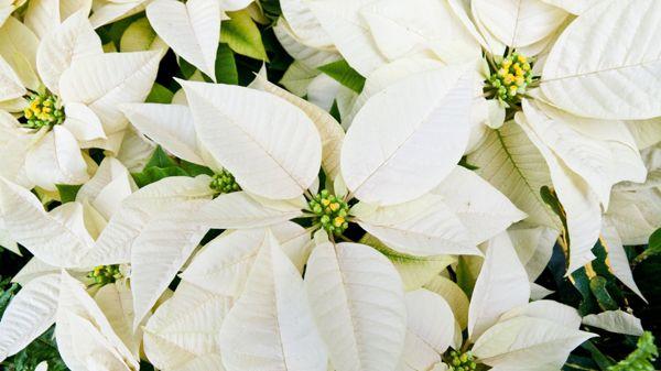 Kukkakauppa ja Viherpalvelu Virvalilja, Laihia