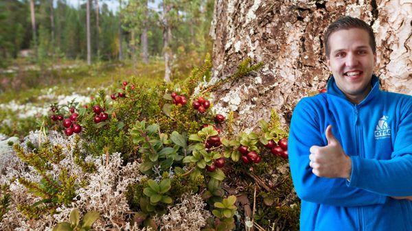 OTSO Metsäpalvelut Oy, Tampere