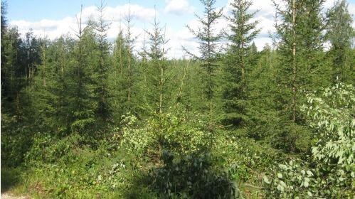 Metsuripalvelu HaKa Oy, Kuopio