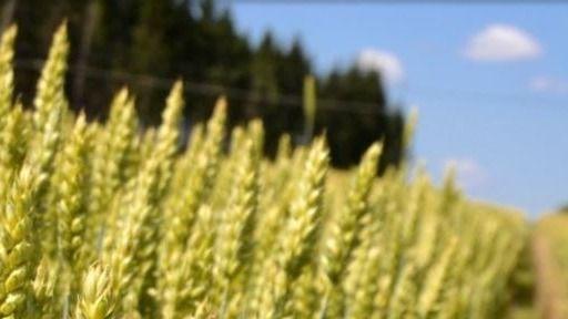 Lammela Oy Lantmännen Agro Eura, Eura