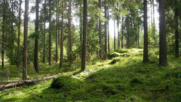 Metsänhoitoyhdistys Pohjois-Pirkka ry Teisko