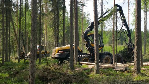 Viita Forest Oy, Viitasaari