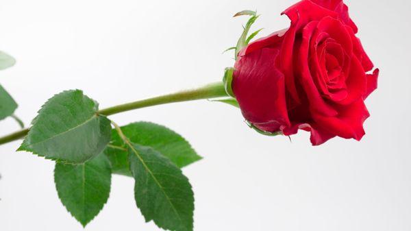 Desapi Kukkasidonnan erikoisliike ja hautauspalvelu, Huittinen