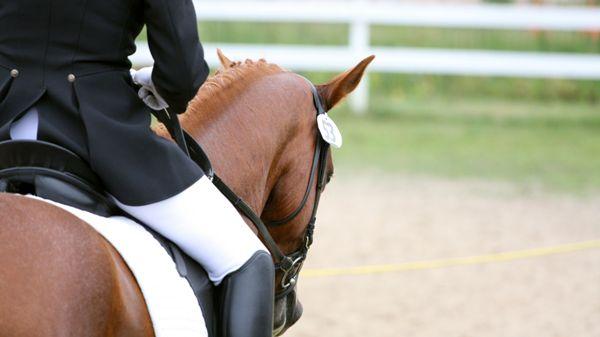 Trans Horses Ky, Tuusula
