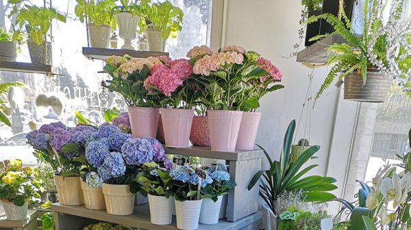 Kukkahuone Meritorni, Kotka