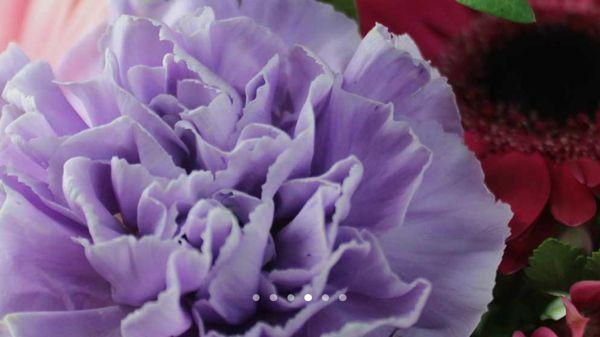 Rantakylän kukka, Mikkeli