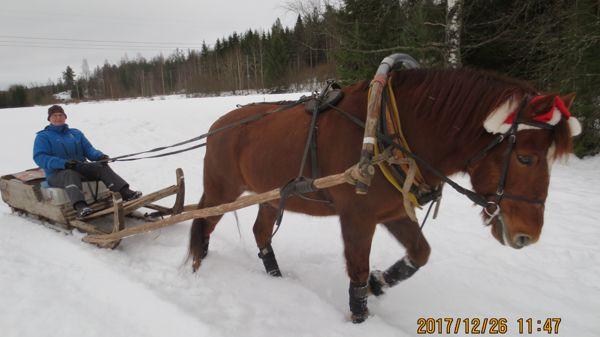 Eläinlääkäri Pirjo Pirjola, Hausjärvi