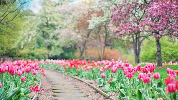 Iris Garden, Raasepori