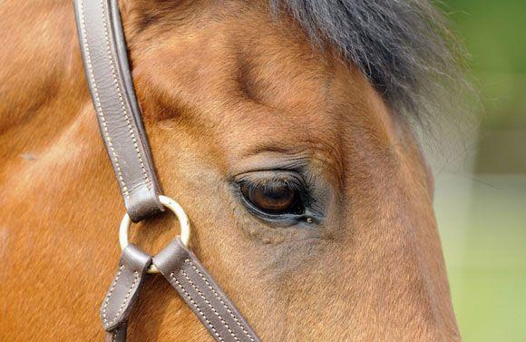 Ratsuriihi hevostarvikeliike, Ypäjä