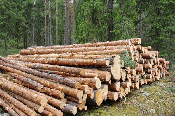 Metsäkone Sjöholm Martti Oy, Ruokolahti