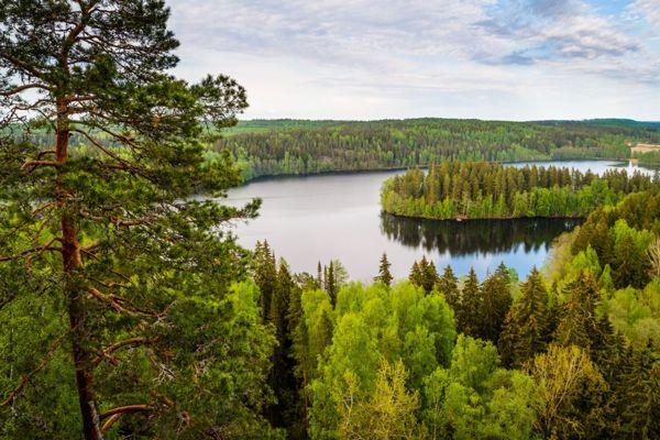 Metsäsuunnittelu Hollanti Oy, Oulainen