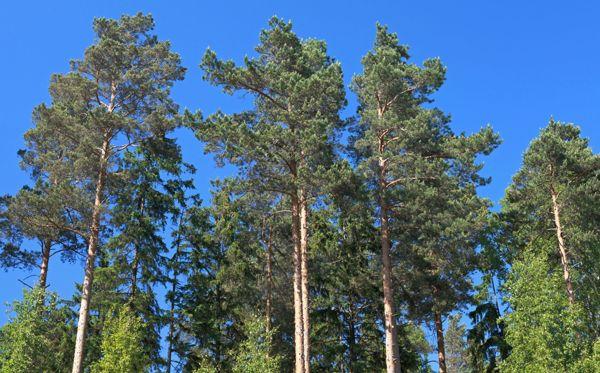 Metsäkoneurakointi Välipakka Oy, Viitasaari