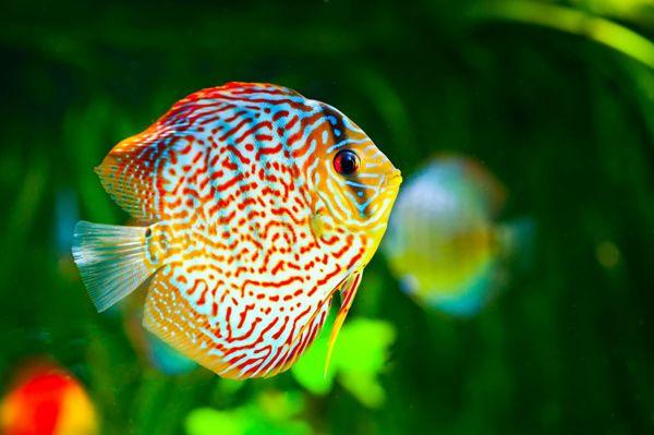 Uusi Akvaario